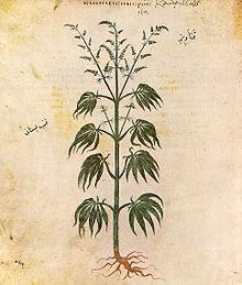 impotencia de los efectos secundarios del cannabis