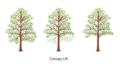 Canopy-lift3fullcolor650x350.png