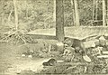 Castorologia, or The history and traditions of the Canadian beaver (1892) (20540501355).jpg