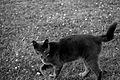 Cat 2.9mb.jpg