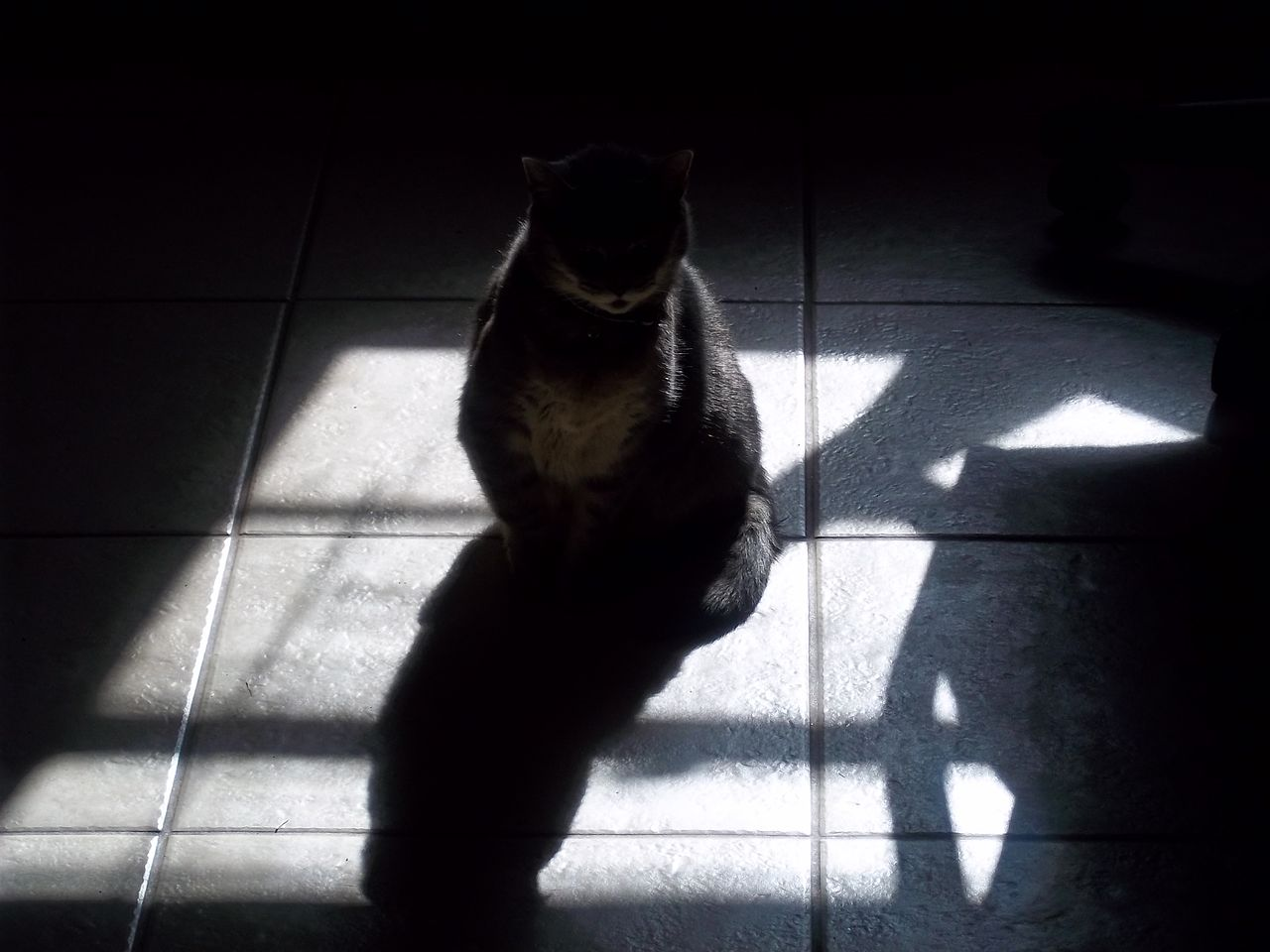 File Cat In Patch Of Sun And Shadow Jpg Wikimedia Commons