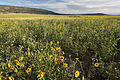 Cebolla Wilderness (9505588402).jpg