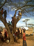 Children climb in a tree, in one of the Dadaab refugee camps, north-east Kenya (5942667571).jpg