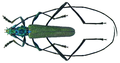 Chloridolum spec. (Laos 12) (8353147348).png