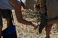 Cholla cactus on shoe soles (36253814214).jpg