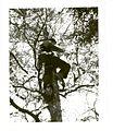Climbing tree In Calling Lake Alberta (6472472769).jpg