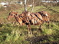 Close-up of Scrap Metal Sheep, Spen Valley Greenway, Liversedge - geograph.org.uk - 104753.jpg