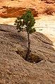 Colorado National Monument (bc03c7fe-b32a-4c0f-8265-e31f02b2712e).jpg