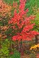 Colors (1538958291).jpg