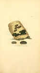 Coloured Figures of English Fungi or Mushrooms - t. 355.png