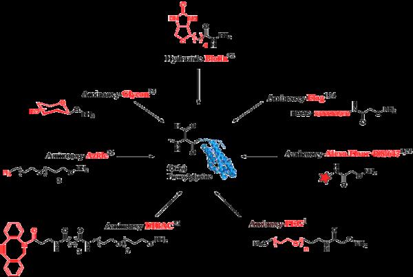 Glycin Informationen aus der Naturheilpraxis von René Gräber Anwendung Wirkung und Nutzen Glycin Gly oder G mit der Summenformel C2H5NO2 ist die einfachste aller stabilen Aminosäuren