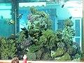 Coral World Underwater Observatory 03.jpg