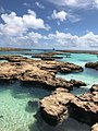 Coral de atol das rocas.jpg