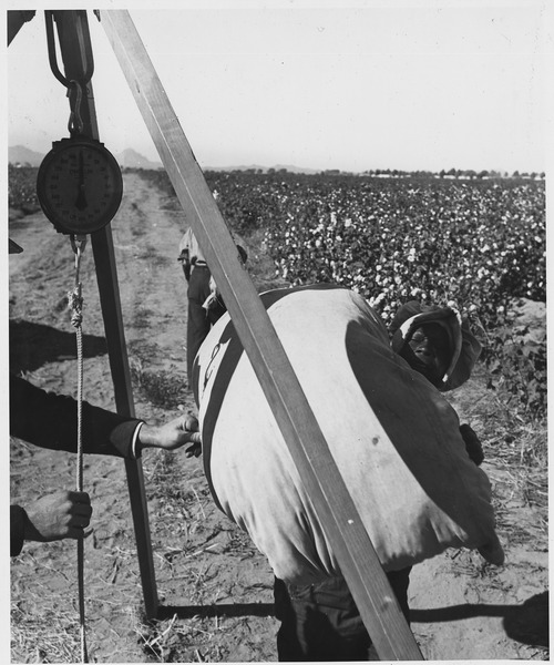 File:Cortaro Farms, Pinal County, Arizona. Weighing cotton at the truck. Negro woman picker brings in her . . . - NARA - 522503.tif