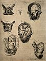 Cross-sections of seven different figures of the pregnant ut Wellcome V0014930.jpg