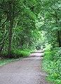 Cross Riding, Sandall Beat Wood - geograph.org.uk - 449066.jpg