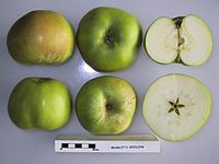 Cross section of Bramley's Seedling (LA), National Fruit Collection (acc. 1974-341).jpg