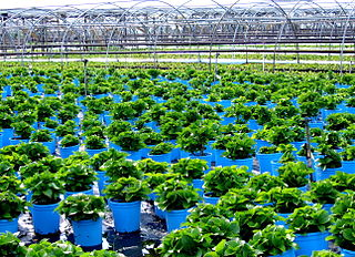 Plant nursery facility where plants are propagated and grown to usable size