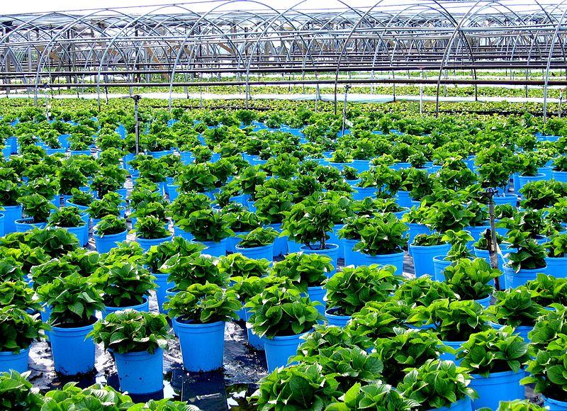 مشتل نباتات زينة شتلات فاكهة 800px-Cutchogue_-_Or