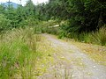 Cycle Trail in Leanachan Forest - geograph.org.uk - 511326.jpg
