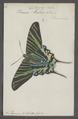 Cydimon - Print - Iconographia Zoologica - Special Collections University of Amsterdam - UBAINV0274 059 01 0002.tif