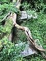 CypressFarmCemetery.jpg