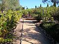 DSC24898, Viansa Vineyards & Winery, Sonoma Valley, California, USA (4619979371).jpg