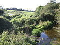 Dairy pasture at Firmount - geograph.org.uk - 575182.jpg