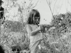 Bestand: Daisy (1964) .webm