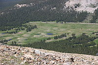 Dana Meadows from Mount Dana.jpg