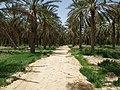 Dattelpalmenplantage bei Douz, Tunesien, 20.06.2012 - panoramio.jpg