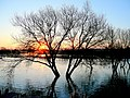 Dawn over the flooded Stour 1 - geograph.org.uk - 1158297.jpg