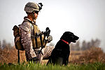 Defense.gov News Photo 120130-M-MM918-001 - U.S. Marine Lance Cpl. Nick Lacarra provides security in a field with his military working dog Coot during a patrol with Afghan Border Police in.jpg