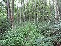 Degučių sen., Lithuania - panoramio (261).jpg