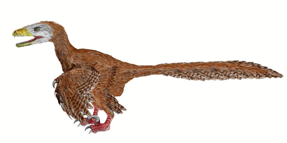Deinonychus BW-2