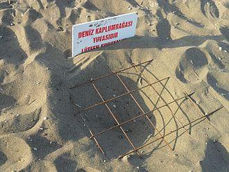 100th Anniversary (Gümüşkum) Nature Park - Image: Deniz kaplumbağası yuvası