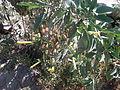 Desert plants 41.JPG