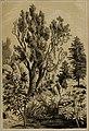 Die Pflanzendecke der Erde - populäre Darstellung der Pflanzengeographie für gebildete Naturfreunde (1859) (20939004475).jpg