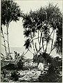 Die Pflanzenwelt Afrikas, insbesondere seiner tropischen Gebiete - Grundzge der Pflanzenverbreitung im Afrika und die Charakterpflanzen Afrikas (1910) (20913935466).jpg