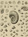 Die Versteinerungen des rheinischen Schichtensystems in Nassau. Mit einer kurzgefassten Geognosie dieses Gebietes und mit steter Berücksichtigung analoger Schichten anderer Lander (1850) (14784191945).jpg