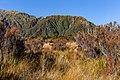 Diedrichs Range, West Coast, New Zealand.jpg