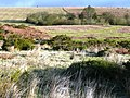 Different types of moorland - geograph.org.uk - 685092.jpg