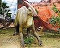 Dinosaurios Park, Parasaurolophus.JPG