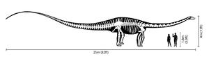 300px Diplodocus size comparison