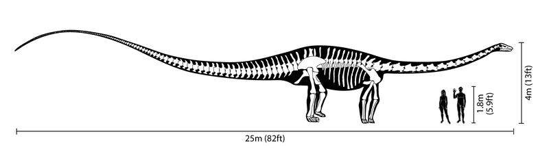 Archivo:Diplodocus size comparison.png