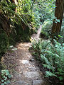 Dipsea Race - Course - Steep Ravine.jpg