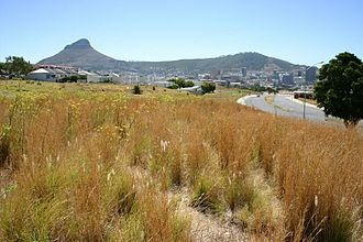 District Six - Lion's head and Signal Hill behind the grass of abandoned District Six in December 2006