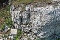 Dolostone (Put-in-Bay Dolomite, Upper Silurian; South Bass Island, Lake Erie, Ohio, USA) 4 (48541323572).jpg