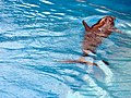 Dolphins (7981062793).jpg