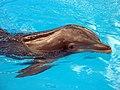 Dolphins (7981086578).jpg